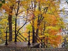 #MTLMoments in Montral : Exploring the beautiful Quebec city (Creativelena) Tags: mtlmoments montreal city travel experience culture art streetartgraffiti food foodlover foodie foodtour fitzfolwell ebike tour park nature indiansummer canada quebec hostel accommodation gomedia gomedia2016 oldport market museum photography fall maple tree river rgine cafe brunch hotel monttremblant