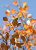Light vs. Shadow (AnyMotion) Tags: leaf leaves blatt blätter sky himmel light licht shadow schatten autumncolours herbstfärbung tree baum nature natur cemetery 2016 frankfurt anymotion maincemetery hauptfriedhof hessen germany 7d2 canoneos7dmarkii colours colors farben orange yellow gelb brown braun autumn fall herbst automne otoño ngc npc