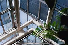 Brooklyn Botanic Garden (brittani m.) Tags: brooklynbotanicgarden brooklyn nature flowers adventure travel minimal succulent roam visual newyorkcity newyork newadventures shoot everything