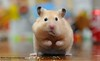 Crumbs On The Table (disgruntledbaker1) Tags: hbw hamster disgruntledbaker