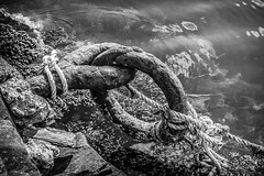Mooring ring and seaweed (Terje Helberg Photography) Tags: sea water bw coast rocks summer black white monochrome seascape ring mooring seaweed
