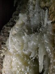 """Concrezioni """"Eccentriche"""" (IW3RHL) Tags: impossibile carso grotta trieste eccentriche concrezioni caverna cristalli cave basovizza 6800re re6800 italia italy corso foiba 2016"""