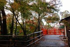 DSC02764 (MrSUIZOU) Tags: 京都 紅葉 北野天満宮 平野神社 十月桜
