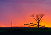 Going with the Golden Glow (tquist24) Tags: goshen hdr indiana nikon nikond5300 outdoor autumn bare evening fall famr farm rural silhouette sky sunset tree