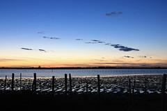 Les petits pas du soir (Emmanuelle2Aime2Ailes) Tags: paysage etang camargue coucherdesoleil ciel reflets cmwdblue