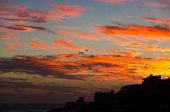 Ibis sunset [explored 24-10-2016] (Kadu Flyer) Tags: ibis