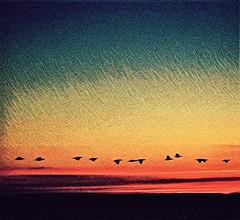 Ducks3 (Thought Knots Design) Tags: thought knots design photography antigonish nova scotia canada atlantic ocean water sea gulf east coastal coast sun tkd maritime maritimes sunrise sunset cloud clouds sky skies