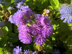 WP_20161020_08_59_34_Rich (vale 83) Tags: flowers microsoft lumia 550 wpphoto wearejuxt macrodreams friends colourartaward lunaphoto coloursplosion