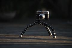 Morning exercise (Budoka Photography) Tags: vintagecamera voigtländer tripod manual canonfd50mmlf12 canonllens creative outdoor bokeh depthoffield dof