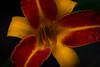 Flower (VGOo) Tags: canon eos 70d flower blume austria österreich colorful plants nature outdoor schärfentiefe pflanze blütenblatt hell pastell makro organisches muster fotorahmen