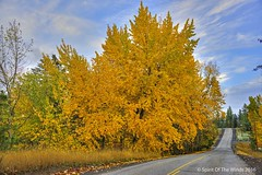 "Autumn  --  A Wonderful Thing (jimgspokane) Tags: autumn fall trees washingtonstate ""nikonflickraward"" otw"