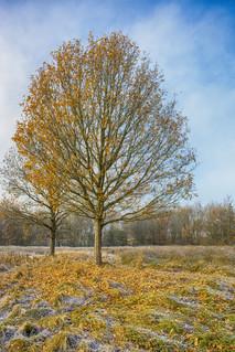 Autumn frost ~ Explored