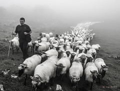 Gorbeiako azken artzaina (Jabi Artaraz) Tags: jabiartaraz jartaraz zb euskoflickr artzaina pastoreo rebaño niebla pastor behelainoa artaldea jonetxebarria puy arrieta puyarrieta pastores familia