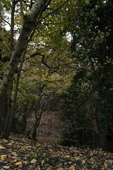 IMG_8862 (Geoff_B) Tags: badockswood bristol walkinthewoods autumn november unprocessed unedited