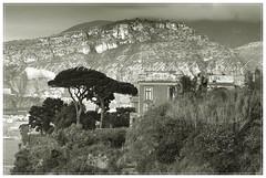 a part of Sorrent (friedrichfrank1966) Tags: bw einfarbig monochrome italy sorrent amalfikste villa tree garden mountain montagne himmel