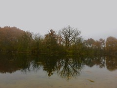 Waters Edge (Andy Stones) Tags: mist autumn iphone iphoneography water pond satellite imagecapture imageof trees nature image lincolnshire nlincs exposure scunthorpe ashby ville