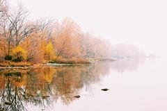 Fog Gradient Au Naturel (amarilloladi) Tags: trees autumn fall washington pacificnorthwest snakeriver river mist fog