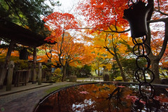 20161203-DS7_5662.jpg (d3_plus) Tags: a05 building d700 street  architecturalstructure dailyphoto kanagawapref thesedays  ancientcity history    temple  streetphoto nikon shintoshrine   architectural nikond700 touring scenery    wideangle  shrine    superwideangle holyplace sanctuary autumnfoliage japan  autumn historicmonuments tamronspaf1735mmf284dild daily  fall tamronspaf1735mmf284dildasphericalif tamronspaf1735mmf284dildaspherical  nature tamron1735 tamronspaf1735mmf284    sky park    buddhisttemple   autumnleaves