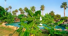 Mersin-2015-1200 (emirerten) Tags: vacation tree tourism pool view banana palm palmiye akdeniz muz ağaç mediterrian turizm