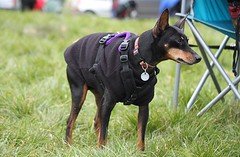 (orbit9000) Tags: dog chien hund canicross checkendonchallange