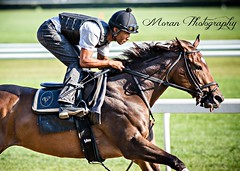 Antonucci trainee (EASY GOER) Tags: horses horse ny newyork sports race canon track running racing 5d athletes races thoroughbred equine thoroughbreds belmontpark markiii