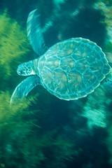 20150906-DSC_3827-2.jpg (d3_plus) Tags: sea sky fish beach japan scenery underwater diving snorkeling  seaturtle shizuoka    apnea izu j4  waterproofcase    skindiving minamiizu        nikon1 hirizo  1030mm  nakagi 1  nikon1j4 1nikkorvr1030mmf3556pdzoom beachhirizo misakafishingport  1030mmpd nikonwpn3 wpn3