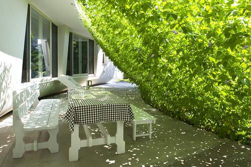 緑のカーテンの家〜フィレット〜の写真