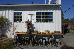 Outdoor Eating Area (Heath & the B.L.T. boys) Tags: bird pumpkin restaurant washington bucket cafe antique barrel stool crate