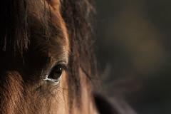 IMG_3327 (weirona) Tags: pferd tamron150600mm