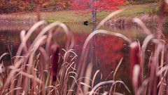 Fall 2015 Thomas Road Outpost  (35 of 98) (thomasroadoutpost) Tags: camping trees camp mountain lake reflection fall nature creek canon bedford fire photography virginia photo waterfall kevin fallcolor fallcolors campfire trail blueridgemountains blueridgeparkway lu sharptop tro peaksofotter struble georgewashingtonnationalforest peaksofotterlodge thomasroad abbottlake thomasroadbaptistchurch loveva lovevirginia fall2015 fallcolors2015 kevinjstruble jonthanfalwell thomasroadoutpost