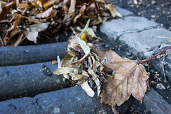 Autumn (Spannarama) Tags: road uk autumn london leaves grate floor blackheath ground drain pile groundlevel gutter drift ratseyeview catorestate