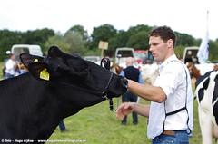 IMGP5318-319 (hugomekersfotografie) Tags: delta hugo dieren crv koeien boerderij 2015 boeren veehouderij brownswiss roodbont veeteelt tractoren rundvee zwartbond rijkse streeknieuws hugomekersfotografie fokveedageibergen