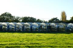 Serrées (jeffandcompagny) Tags: blue green art colors design couleurs champs vert bleu fields provence var a77 toulon