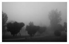 Jardines (ric) Tags: bw espaa fog bn alicante niebla torrevieja imagemagick uploadscript imagedatanexus1150f27100 im:opts=crop3264x20000150level59008fx07r03g photo:id=227525315101df669944bojpg