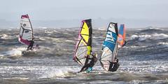 PC311292-Edit (Brian Wadie Photographer) Tags: gulls oystercatcher windsurfing kiting em1 goodlight 14xtc avonbeach canon70300lis hemgistburyhead