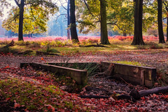 Autumn Equinox - Bring on the Colour! (sawyersource) Tags: colour colours seasonal seasons trees leaves red green orange fallen leaf woods woodland d7200 35mm nikon branches uk gb britain autumn equinox autumnal wood serene richmondpark