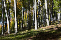DSC_0187 (Pter_Szab) Tags: mtra matra hungary nature autumn colours mountains galyateto galyatet forest hiking nationalpark landscape
