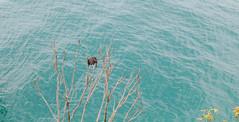 IMG_0088.jpg (Idiot frog) Tags: sunmoonlake lake water nantou 5d2 green canon taiwan 5dmk2 eos éæ± é èºç£ç å°ç£ tw