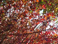 Herbst macht Fortschritte-bw_20161007_070066.jpg (Barbara Walzer) Tags: 071016 blätter bunt bäume farbe herbst natur wald blã¤tter bã¤ume