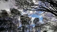 Textura area (Jos Argemiro) Tags: cu azul galhos ramos textura contraste parque jardim floresta ar areo blue sky ramification branches texture contrast park forest garden aerial air wood grove arvoredo mata bosque biodiversidade botnica botany biodiversity