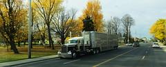 Vernla (jr-transport) Tags: kenworth w900 w900l custom ft frances largecar cattle pot hauler vernla