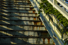 20161024_DP3M1015 (NAMARA EXPRESS) Tags: street stair bridge shadow autumn fine outdoor color toyonaka osaka japan foveon sigma dp3 merrill namaraexp