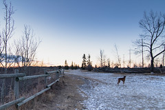 Morning in the dog park (Charlotte.Curtis) Tags: riverpark sunrise calgary landscape hdr dog