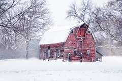 :: winter barn :: (mjcollins photography) Tags: red barn winter snow falling fall rural farm old rustic rundown white