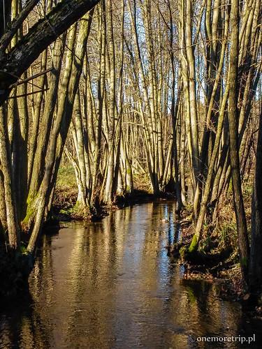 161112-134922-luboradza lasy