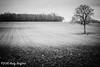 Farmland, the Nièvre (serial_snapper) Tags: france républiquefrançaise blackwhite landscape tree nièvredépartement bourgognefranchecomtérégion ciez bourgognefranchecomté fr