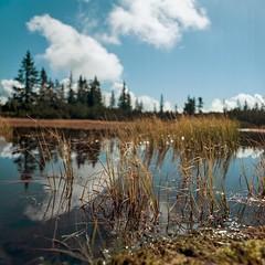 Schwarze Lacke (cardijo) Tags: sterreich austria salzburg landscape landschaft water wasser tree baum clouds wolken hasselblad zeiss planar nikon coolscan kodak portra160 colorperfect