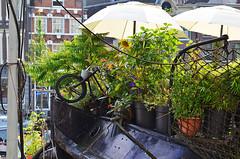A bordo - On board (Ola55) Tags: ola55 canale canal viveresullacqua livingonthewater amsterdam boat barca ombrellone umbrella bicicletta bici bike bicycle planta piante verde green italians fiori flowers