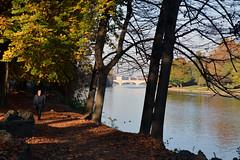Sole d'autunno -  Autumn sun. (sinetempore) Tags: soledautunno autumnsun street torino turin parcodelvalentino parco parck autunno autumn alberi trees fogliesecche dryleaves fiume po river ponteumbertoi bridge