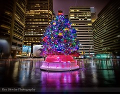 Center City Christmas Tree (Ray Skwire) Tags: pa philly philadelphia 215 centercity downtown dilworth dilworthpark tree christmastree hdr highdynamicrange sigma sigma1020